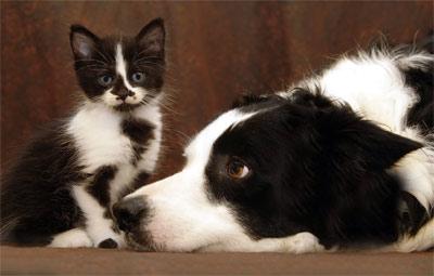 dog_cat400.jpg
