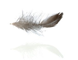 feather-floating-md
