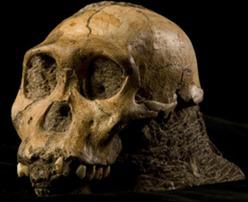 new-ancestor-278x225